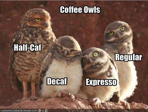 Morning Coffee Memes